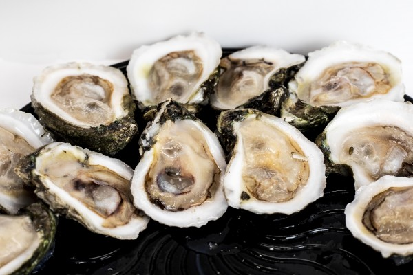 OYSTERS ON HALF SHELL IQF 144 CT CR